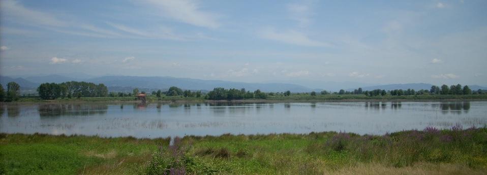 Una nuova zona umida per gli uccelli nidificatori tra Capannori e Bientina