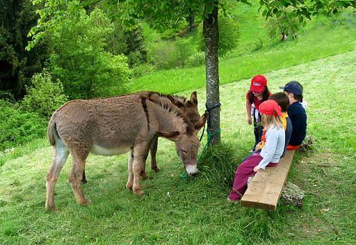Estate in fattoria per i bambini con la Coldiretti Lucca