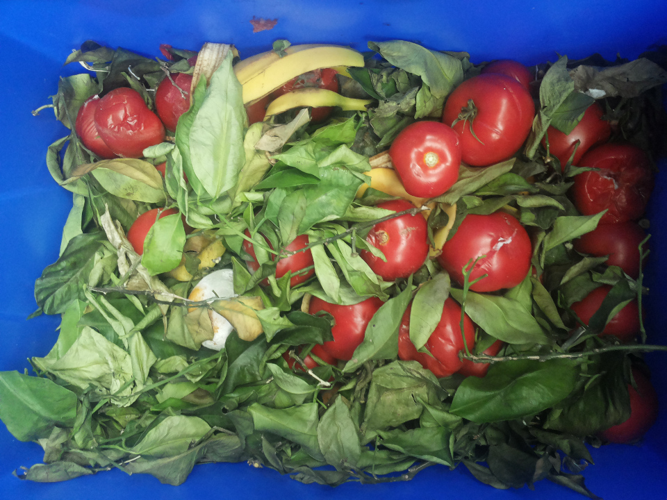 Da scarti a cibo animale: parte da Messina la lotta allo spreco alimentare